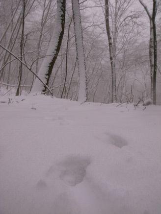 高反山登山 雪の中