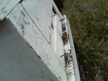 梅さんとミツバチと雑草たち