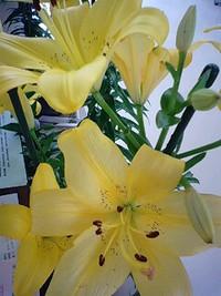 「友の会」さんのお花