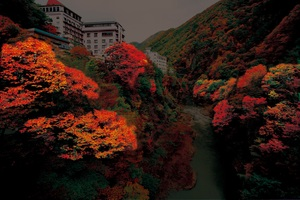 老神温泉渓谷紅葉ライトアップ