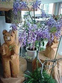 「友の会」さんの藤の花
