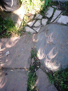 金環日食の木漏れ日