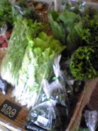 本日の入荷野菜。