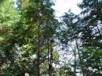 きらめ樹体験。